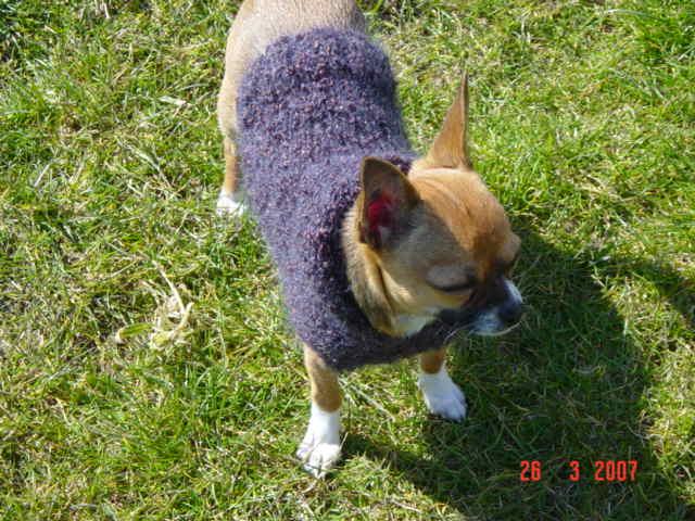 modeles de manteaux pour chiens Dsc03210