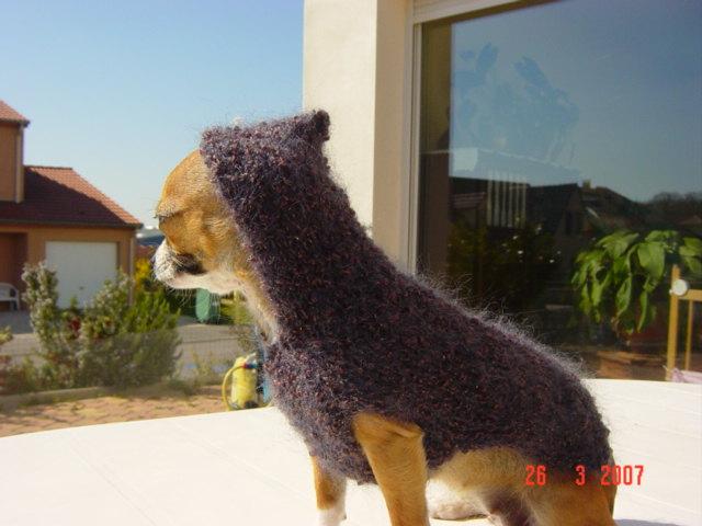 modeles de manteaux pour chiens Dsc03211
