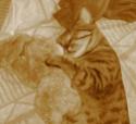 Elliott, Sacha et Minette Sacha11