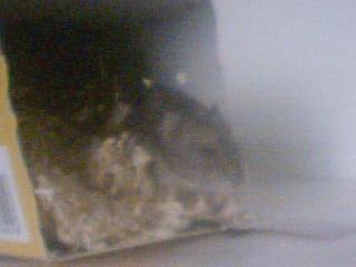 Mes rats Image_14