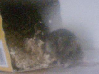 Mes rats Image_15