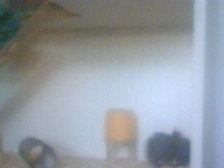 Mes rats Image_22