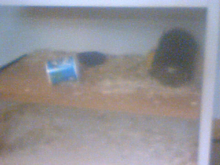 Mes rats Image_27
