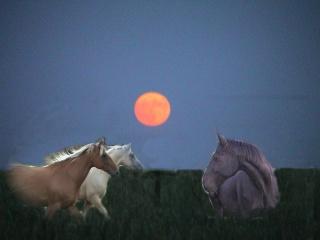 les cavaliers de Marbeuf