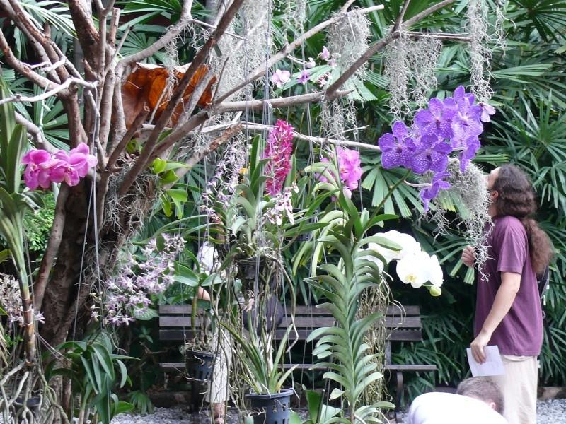 Orchidées de Thailande Du12au13