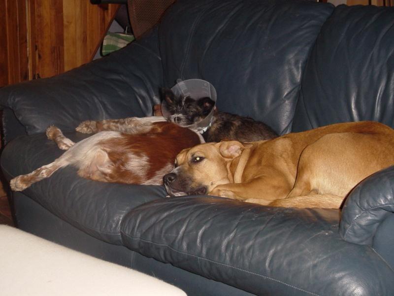 Mogwai, Laika et leurs copines poilues!!!!... - Page 3 Dsc01418