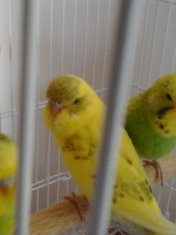Mes petits choux 2012-136
