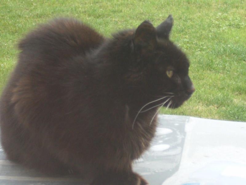 Le sauvetage d'un chat sur Le Quesnel en décembre 2012 (que faire d'un chat trouvé/perdu ?) Hpim5114