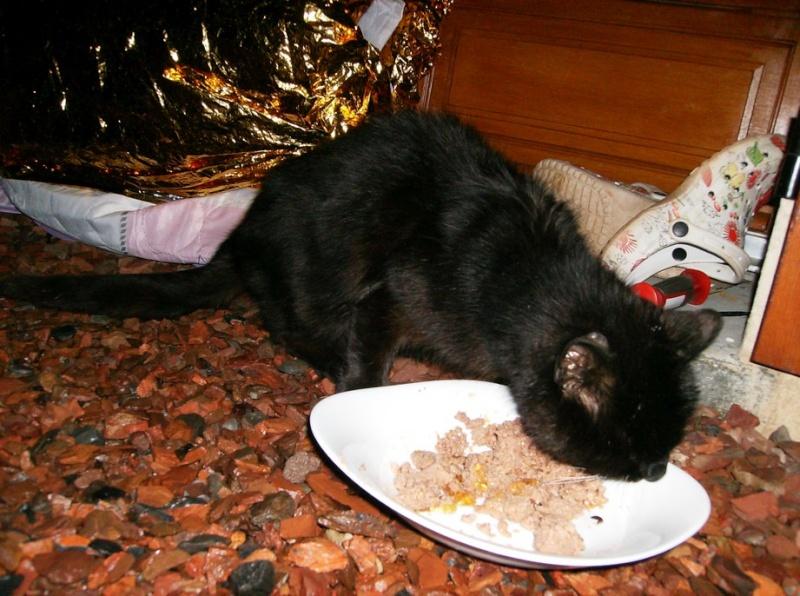 Le sauvetage d'un chat sur Le Quesnel en décembre 2012 (que faire d'un chat trouvé/perdu ?) Hpim5116