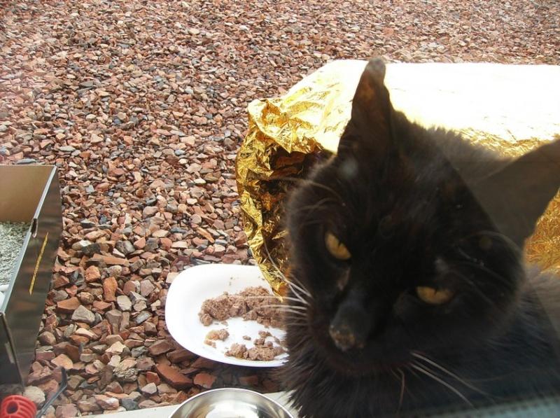 Le sauvetage d'un chat sur Le Quesnel en décembre 2012 (que faire d'un chat trouvé/perdu ?) Hpim5118