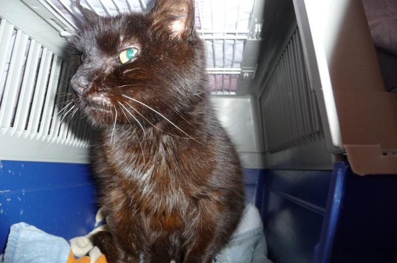 Le sauvetage d'un chat sur Le Quesnel en décembre 2012 (que faire d'un chat trouvé/perdu ?) P1070612