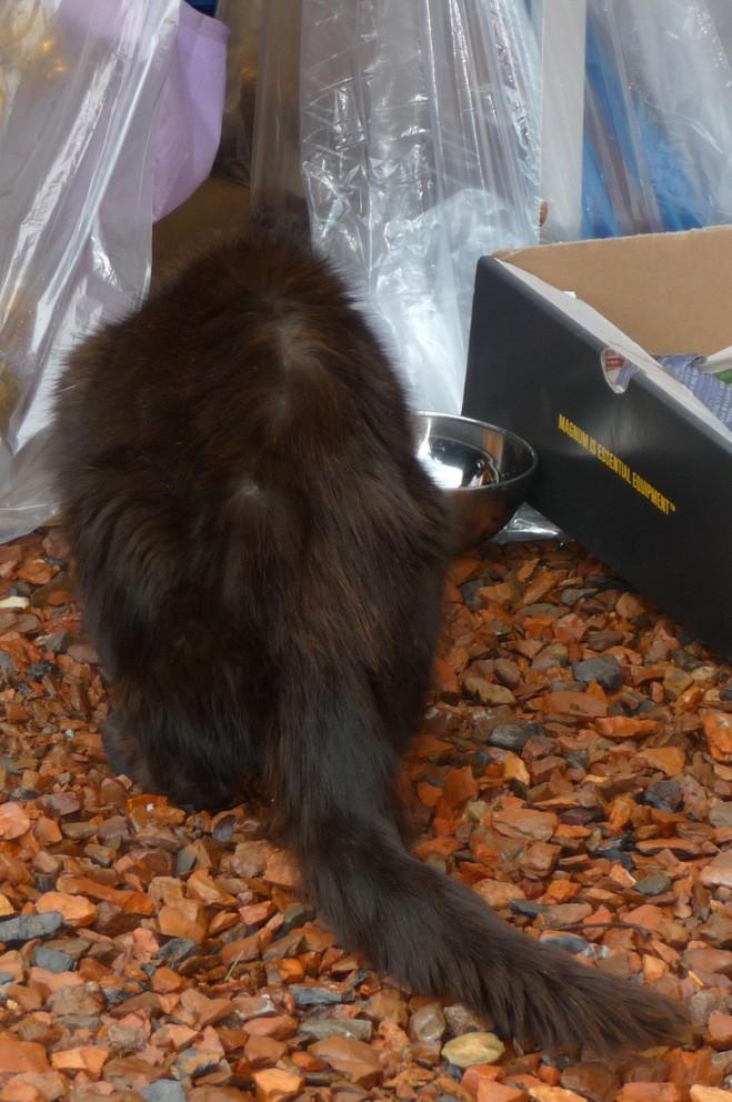 Le sauvetage d'un chat sur Le Quesnel en décembre 2012 (que faire d'un chat trouvé/perdu ?) P1070614