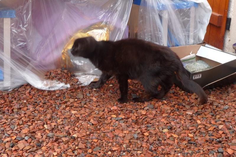 Le sauvetage d'un chat sur Le Quesnel en décembre 2012 (que faire d'un chat trouvé/perdu ?) P1070615