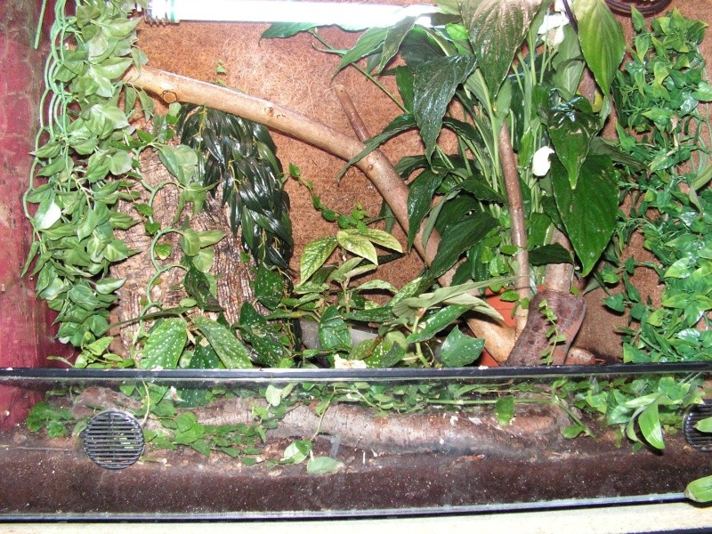 mes reptiles Pict0111