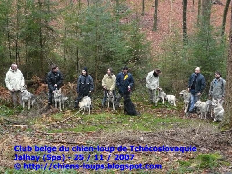 """Photo des """"loups"""" dans la forêt près de Spa Cswbel10"""