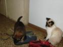 Le temps à Madelonnet du mois de décembre 2007 2007_159