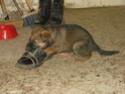 Le temps à Madelonnet du mois de décembre 2007 2007_191