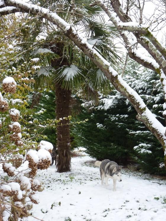 CANDY - femelle husky 12 ans - Asso TAIGA [DECEDEE] - Page 10 P1010912