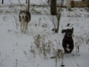 CANDY - femelle husky 12 ans - Asso TAIGA [DECEDEE] - Page 10 P1010911