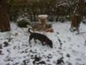 CANDY - femelle husky 12 ans - Asso TAIGA [DECEDEE] - Page 10 P1010913