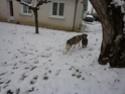 CANDY - femelle husky 12 ans - Asso TAIGA [DECEDEE] - Page 10 P1010914