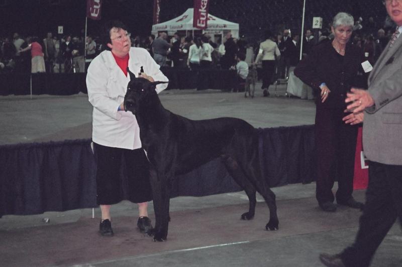 Salon national des animaux de compagnie (SNAC) - Page 4 001_1a10