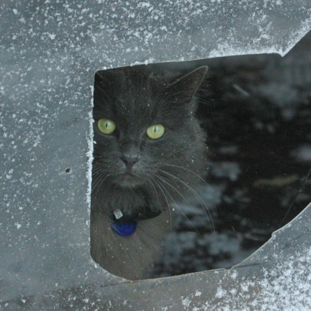 photo contest - Winter 2009-  Your favorite (Nebelung)photo Img_8115