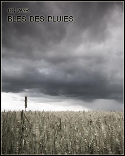 ( Photo des Lieux ) Allae_10