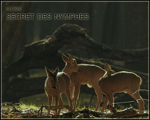 ( Photo des Lieux ) Secret10