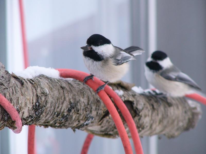 À la distasio, pour les oiseaux!! Deux_p10