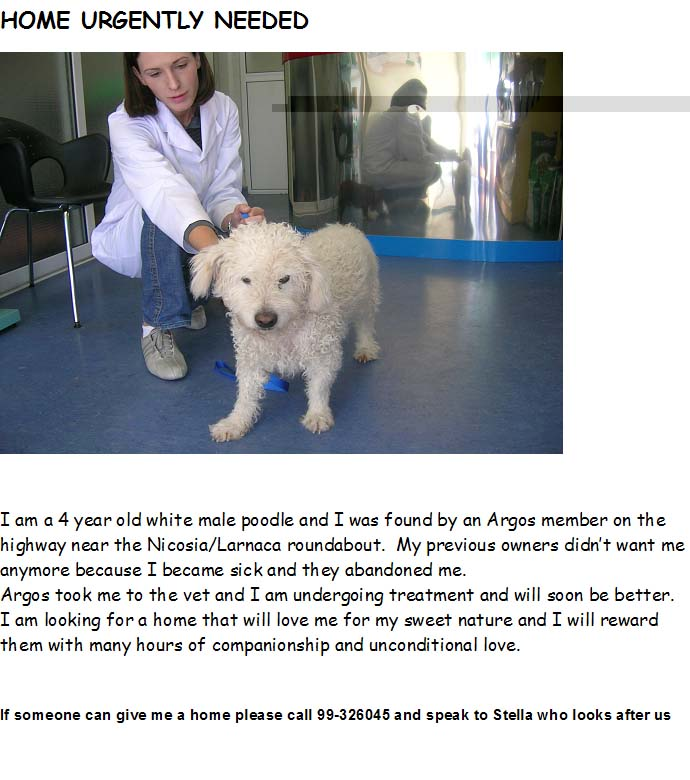 Rehomed - Urgent Home needed for Poodle Poodle10
