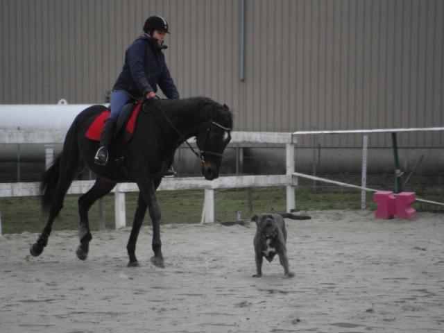 Aux chevaux d'exception