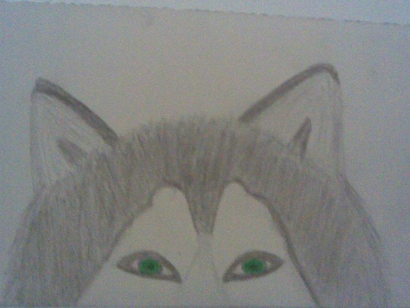 need opinions Wolf10