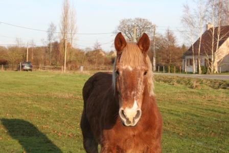 POLKA - cheval de Trait  née en 1984 - adoptée en janvier 2010 par asa  - Page 5 Img_2510