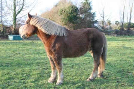 POLKA - cheval de Trait  née en 1984 - adoptée en janvier 2010 par asa  - Page 5 Img_2610