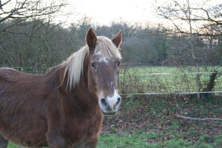 POLKA - cheval de Trait  née en 1984 - adoptée en janvier 2010 par asa  - Page 5 Img_2611