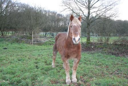 POLKA - cheval de Trait  née en 1984 - adoptée en janvier 2010 par asa  - Page 5 Img_2612