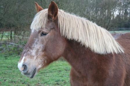 POLKA - cheval de Trait  née en 1984 - adoptée en janvier 2010 par asa  - Page 5 Img_2613