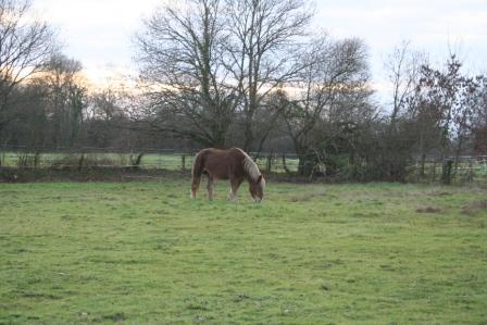 POLKA - cheval de Trait  née en 1984 - adoptée en janvier 2010 par asa  - Page 5 Img_2614