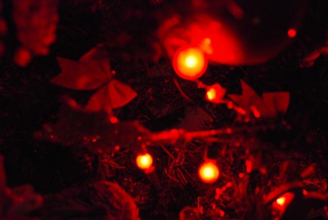 Nos décos de Noël Dsc_0211