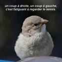 LE BAR A PHOTOS ET VIDEOS : insolites, drôles, émouvantes - Page 6 Pf504812