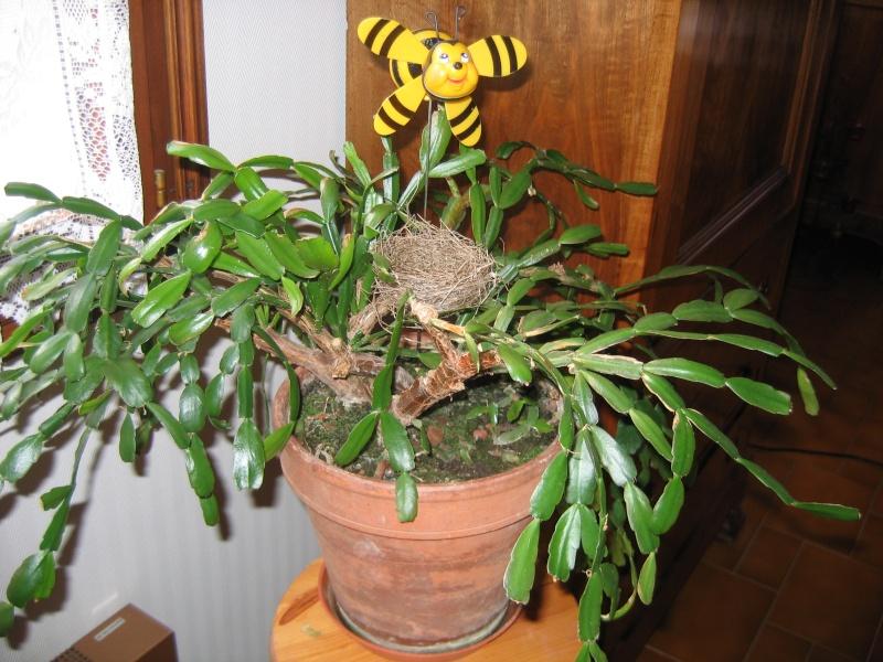 mes plantes vertes! Img_6210