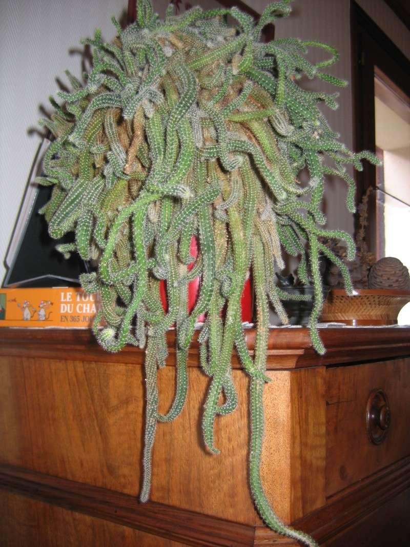 mes plantes vertes! Img_6211