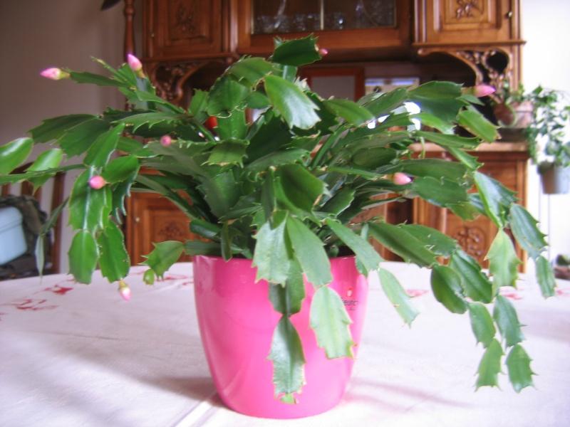 mes plantes vertes! Img_6310
