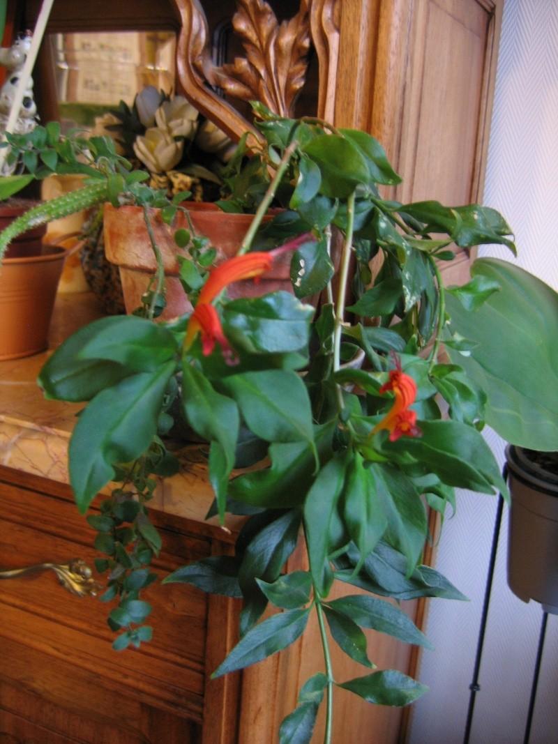 mes plantes vertes! Img_7010