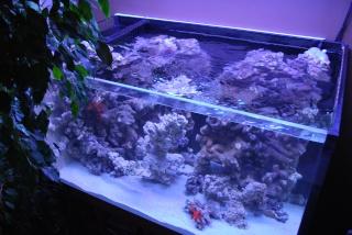 Le bac des Maniacodesrécifs (méthode Reefcorner) - Page 6 Dsc_0413