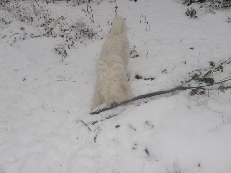 hum la neige Imgp3630