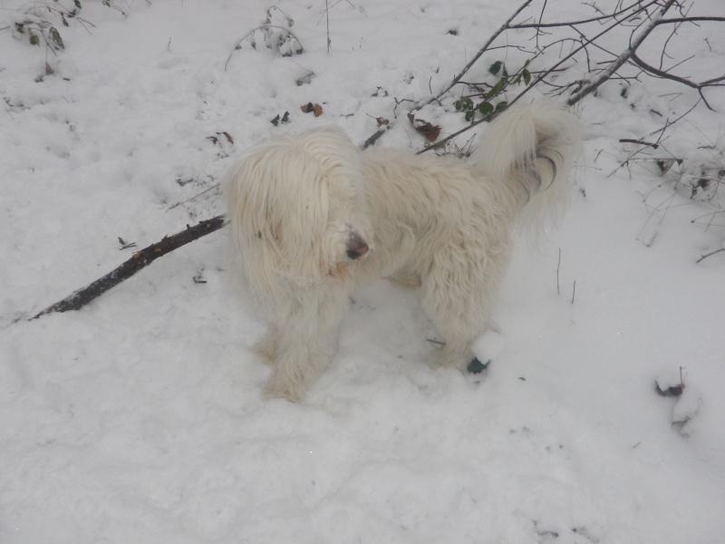 hum la neige Imgp3631