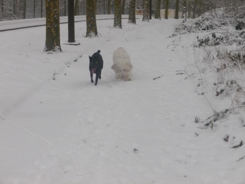 hum la neige Imgp3636