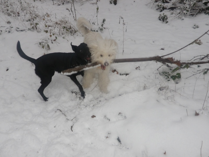 hum la neige Imgp3637
